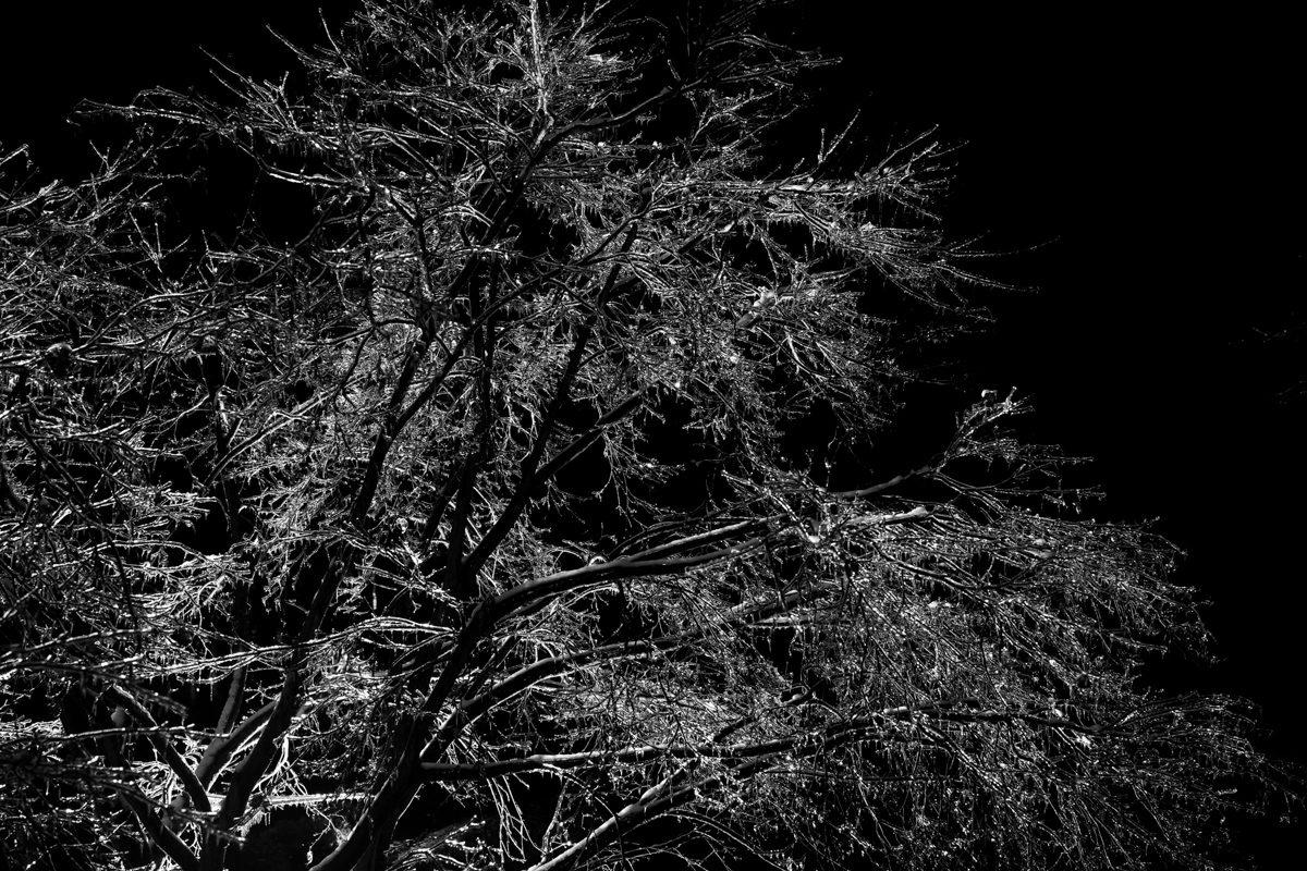 icetree1