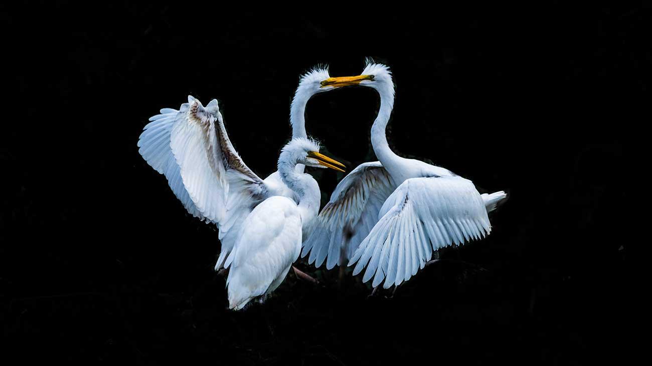 Birds_i-nqczNgB