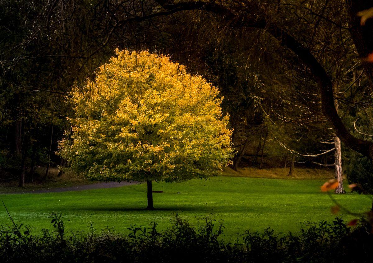 falltree
