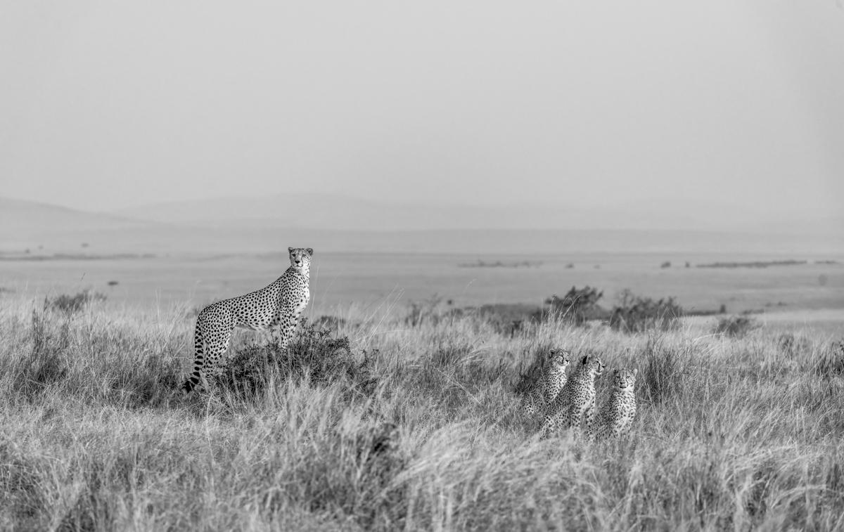 cheetahhillBW3