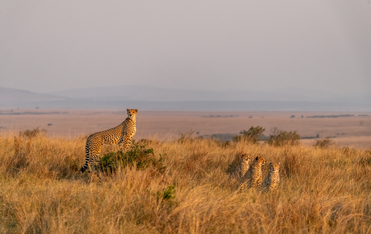 cheetahhillgroup